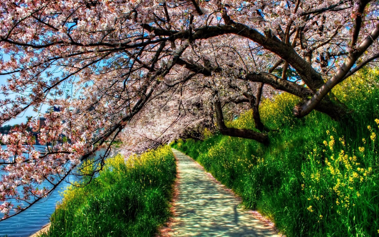Картинки весна красивые пейзажи