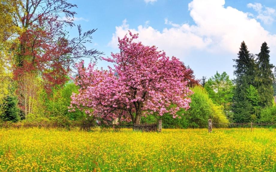 Красивые картинки весны в большом разрешении. Природа, пейзажи