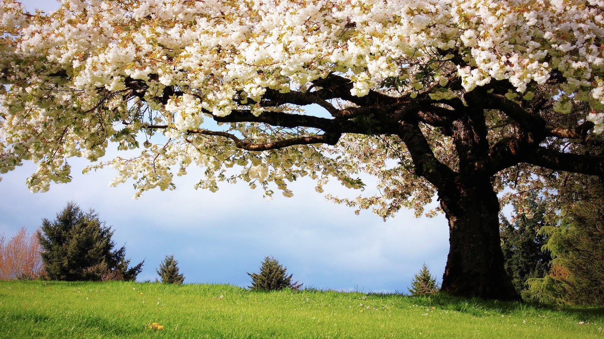 Картинки деревьев и цветов