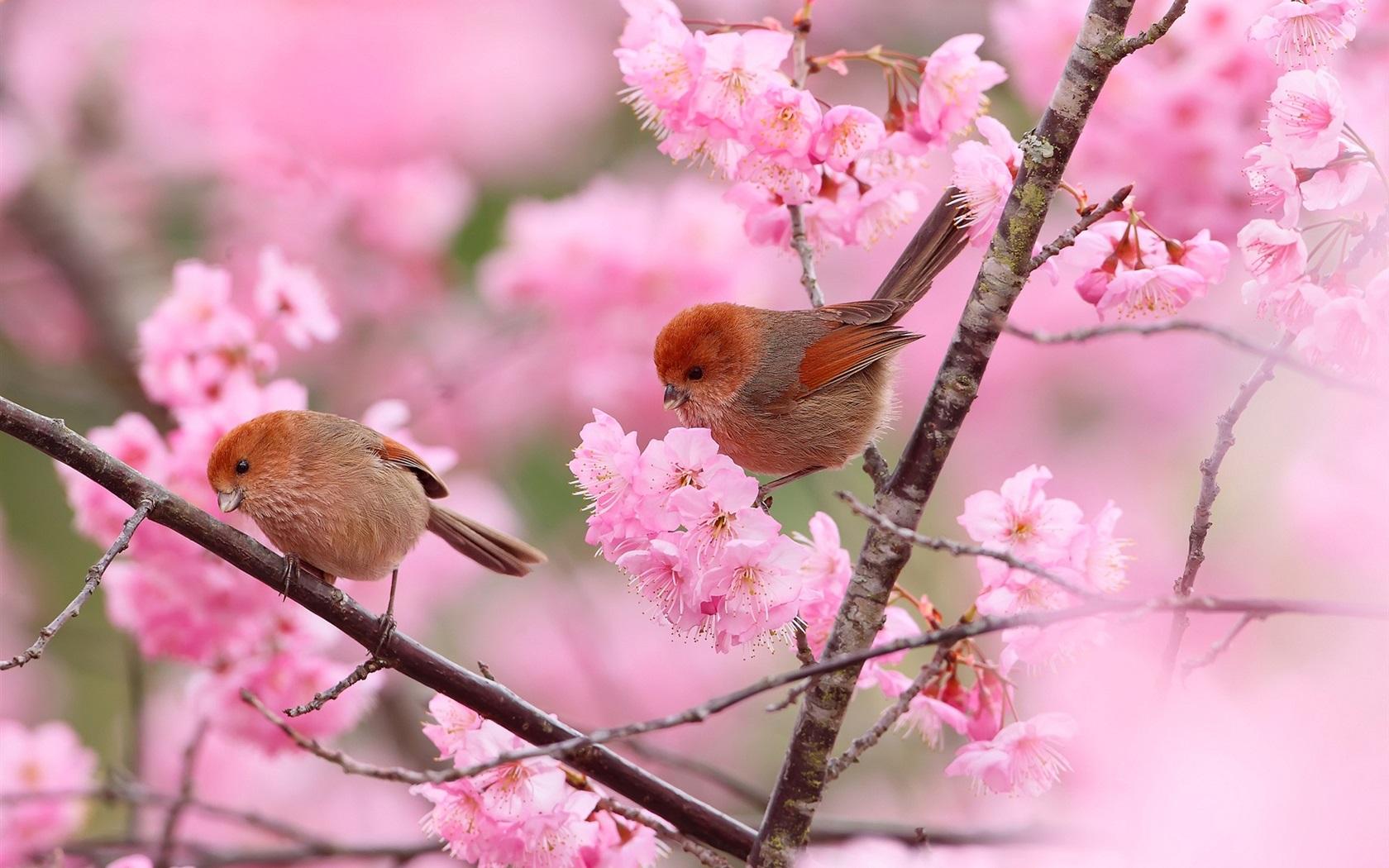 кто заботится красивые позитивные картинки про весну если совместить