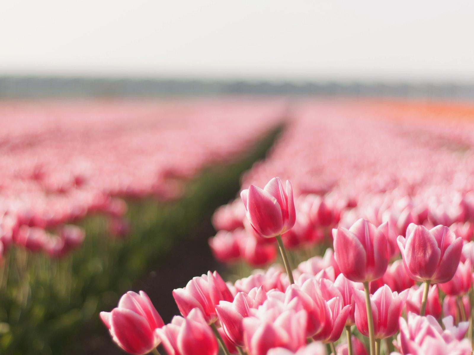 профессии красивые цветы в природе широкоформатное фото вкусно пожарить